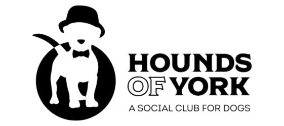 hounds of york toront gold blog